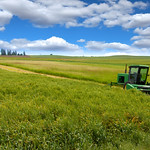 Tractor in the wheat fields